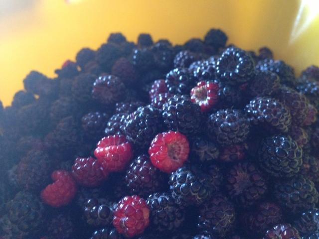 Black and red raspberries!